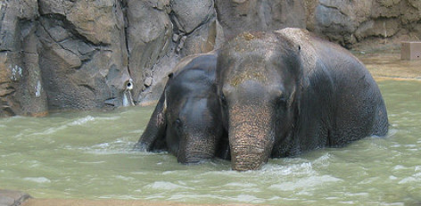 Image result for Vandalur Zoo SUMMER SPECIAL
