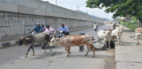 súlycsökkentő művelet chennai-ban