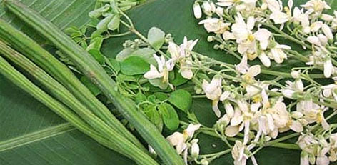 Live Chennai Health Benefits Of Drumstick Flower Health Benefits Drumstick Flower