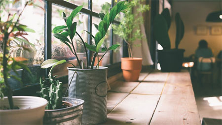 Plants to grow at home in chennai