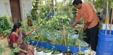 Live Chennai Kits For Roof Top Or Kitchen Gardens Kitchen Gardens Roof Top Kits Roof Top Tamilnadu