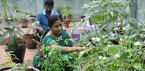 Live chennai rs300 worth vegetable kit to set up terrace gardens the department of horticulture has informed that a package of items like seeds and fertilizers worth rs 500 would be sold at rs 300 solutioingenieria Gallery