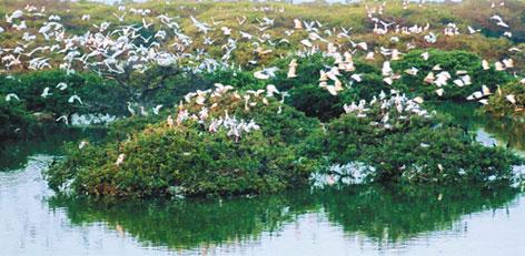 Vedanthangal Bird Sanctuary, Tamil Nadu
